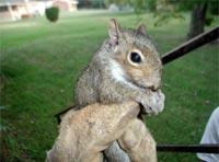 info-squirrels
