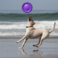 Where To Get Dog Training Tools In Corvallis OR