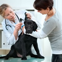 How to choose a veterinarian clinic