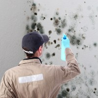 Enjoy the Benefits Offered by Professional Mold Damage Restoration