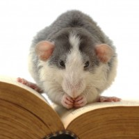 Effective Rodent Control in Tempe Prevents The Spread Of Germs