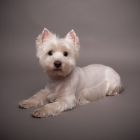Get the Right Pet Supplies in Folsom CA for a New Puppy