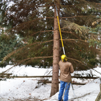 Using A Tree Service in Spokane To Transplant A Tree
