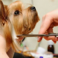 The Importance Of Professional Pet Grooming