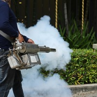 Four Things to Know Before Hiring Pest Control in Tampa