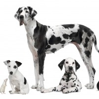 Reliable, Safe and High-quality Pet supplies in Folsom, CA
