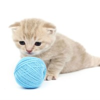 Frequently Asked Questions About Cat Groomers