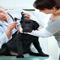 Visits and Vaccines at the Veterinary Hospital