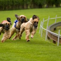 Dog Kennels in Spokane Valley, WA make it Easier to Care for Your Pet