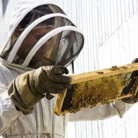 What to Do About a Honey Bee Swarm in Dublin, OH