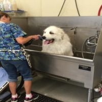Professional Dog Grooming in Omaha, NE is a Necessity