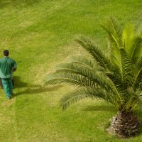 Fight Ticks With Regular Lawn Care