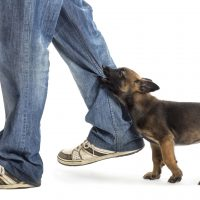 Discussing A Dog Attack With A Personal Injury Attorney In Charles County, MD