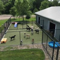 Using Pet Sitters in Omaha NE Outside Of The Home