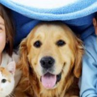 Holistic Doctors A Viable Alternative to Traditional Pet Care