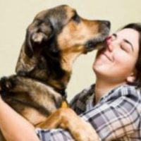 What to Look for When Choosing an Animal Hospital