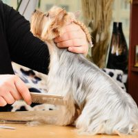 Frequently Asked Questions About Professional Dog Grooming In Odenton